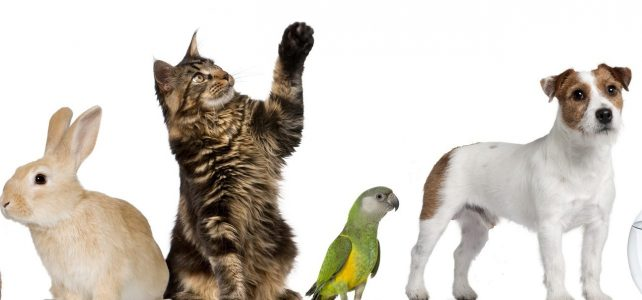 Facturatie voor dierenartsen.